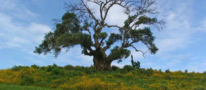 tree-3156341_1920